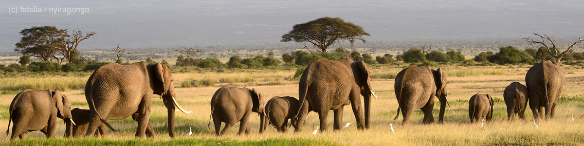 Kenia-Bild